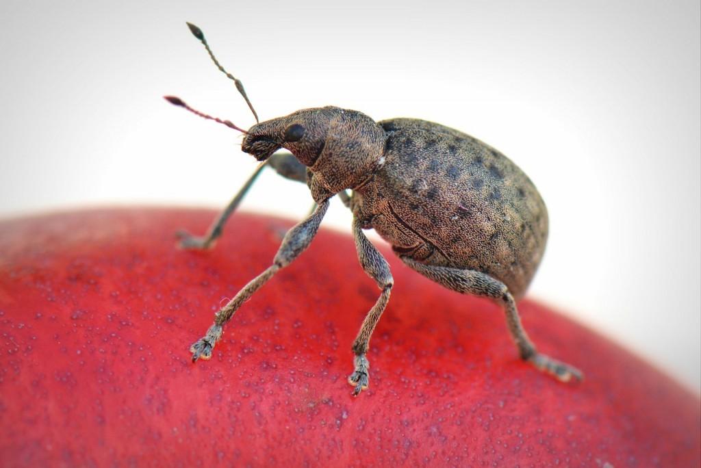 bug-369229_1920